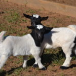 Seven Freedoms Farm John Deere