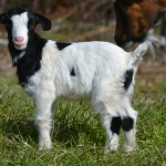 Seven Freedoms Farm Polly Whorley