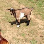 Seven Freedoms Farm Sally Schoonover2